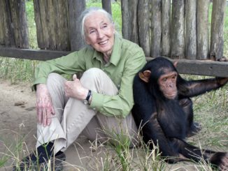 Photo Credit: © the Jane Goodall Institute / By Fernando Turmo